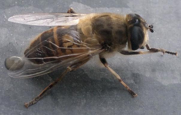 Bee Nokia_N8